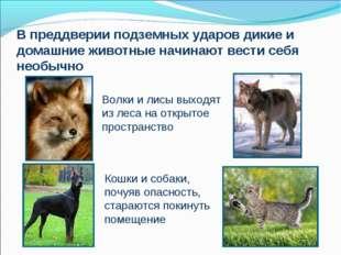 В преддверии подземных ударов дикие и домашние животные начинают вести себя н