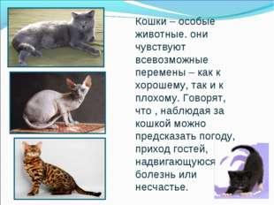 Кошки – особые животные. они чувствуют всевозможные перемены – как к хорошему