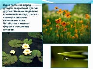 Одни растения перед дождём закрывают цветки, другие обильно выделяют ароматны