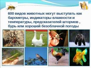 600 видов животных могут выступать как барометры, индикаторы влажности и темп