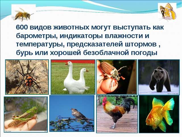 600 видов животных могут выступать как барометры, индикаторы влажности и темп...