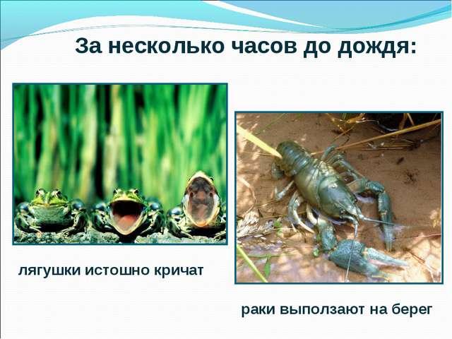 За несколько часов до дождя: лягушки истошно кричат раки выползают на берег