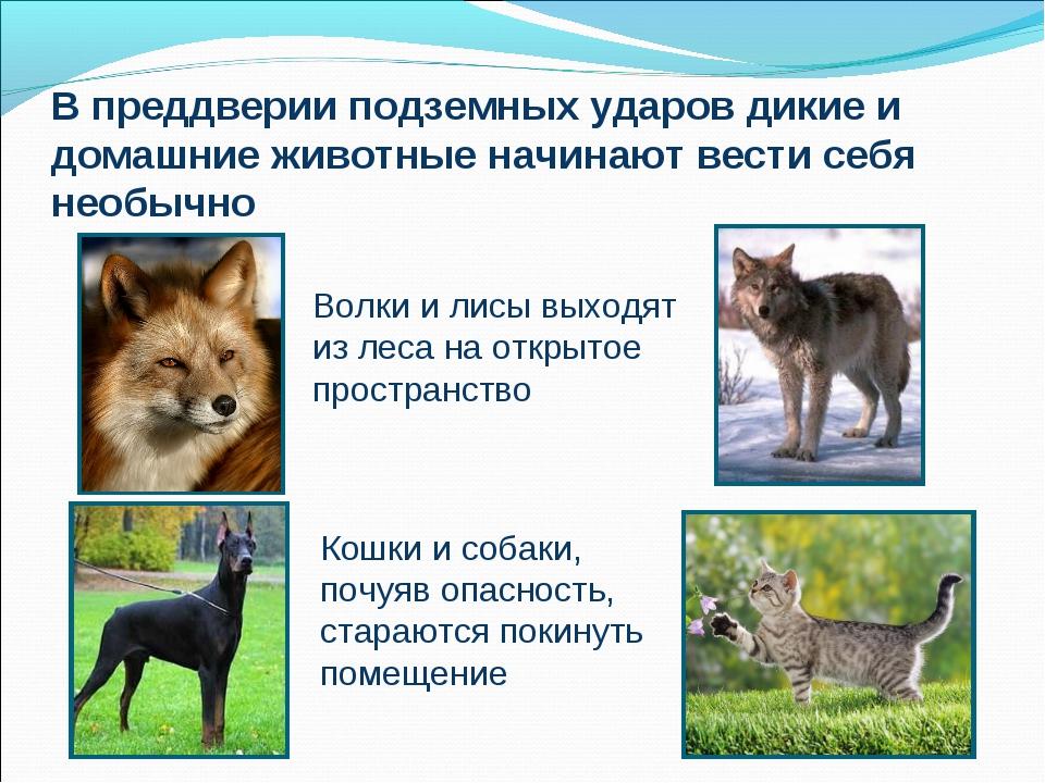 В преддверии подземных ударов дикие и домашние животные начинают вести себя н...