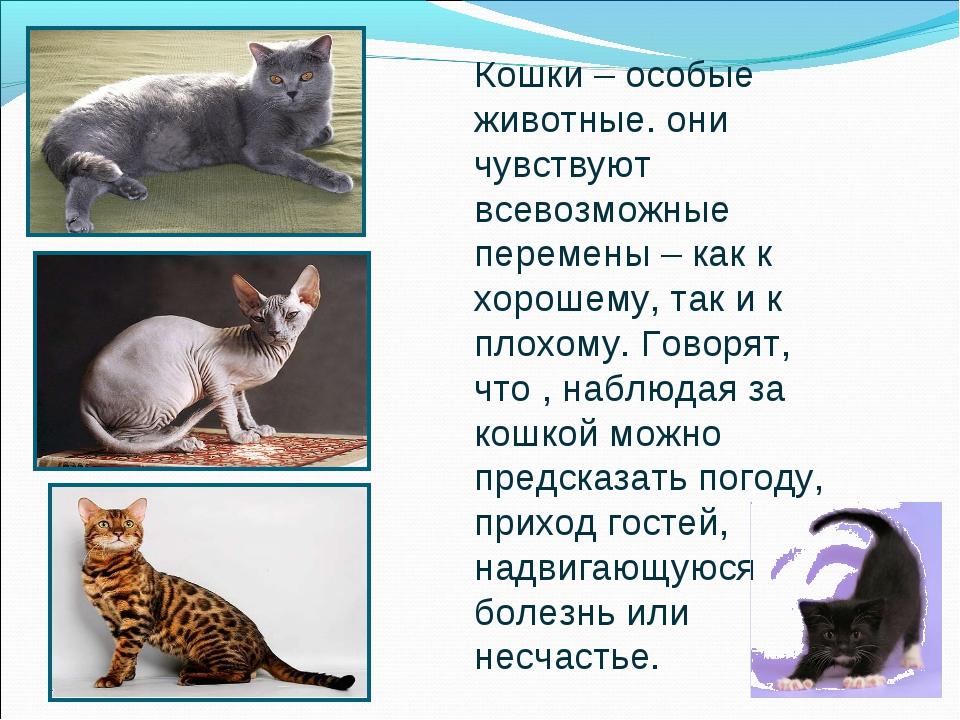 Кошки – особые животные. они чувствуют всевозможные перемены – как к хорошему...
