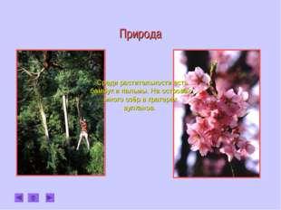 Природа . Среди растительности есть бамбук и пальмы. На островах много озёр в