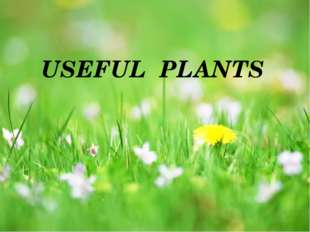 USEFUL PLANTS