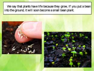 We say that plants have life because they grow, If you put a bean into the gr