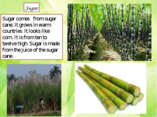 Sugar comes	from sugar cane, It grows in warm countries. It looks like corn.
