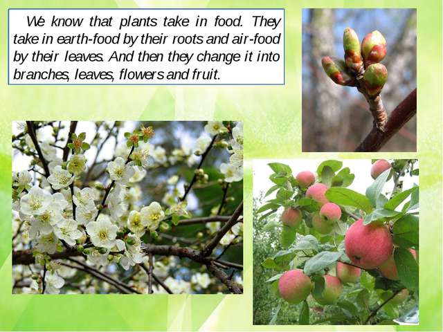 We know that plants take in food. They take in earth-food by their roots and...