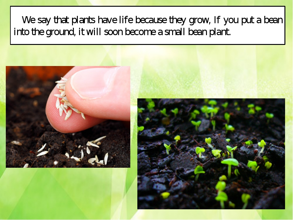 We say that plants have life because they grow, If you put a bean into the gr...