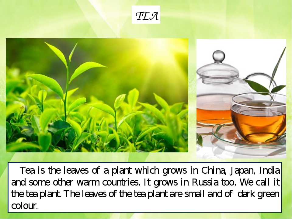 TEA Tea is the leaves of a plant which grows in China, Japan, India and some...