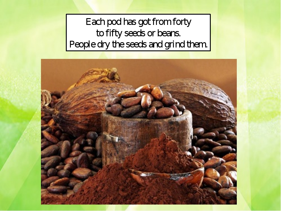 Each pod has got from forty to fifty seeds or beans. People dry the seeds and...
