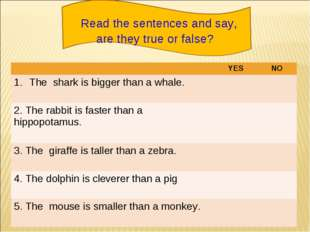 Read the sentences and say, are they true or false? YESNO The shark is big