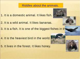 Riddles about the animals. 1. It is a domestic animal. It likes fish. 2. It i