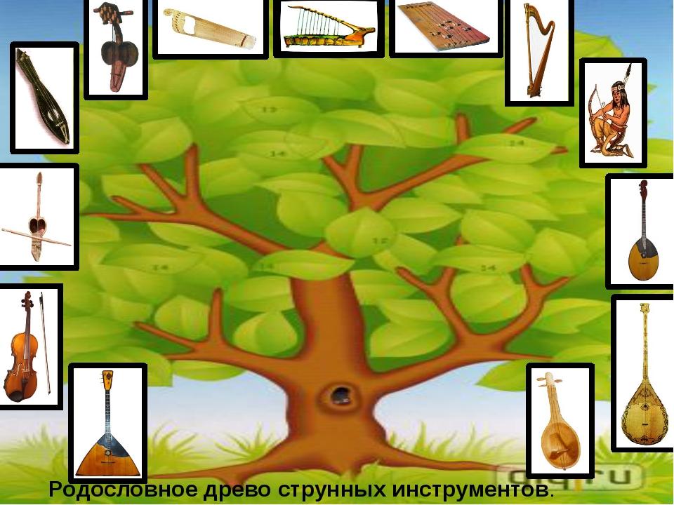 Родословное древо струнных инструментов.