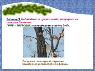 Задание 3. Наблюдаем за организмами, живущими на стволах деревьев. ГРИБ – ТРУ
