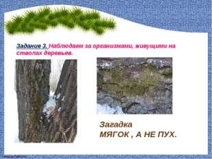 Задание 3. Наблюдаем за организмами, живущими на стволах деревьев. Загадка МЯ