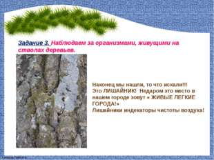 Задание 3. Наблюдаем за организмами, живущими на стволах деревьев. Наконец мы