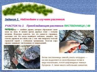 Задание 2. Наблюдаем и изучаем растения. УЧАСТОК № 1 Преобладающее растение
