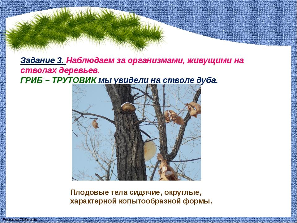 Задание 3. Наблюдаем за организмами, живущими на стволах деревьев. ГРИБ – ТРУ...
