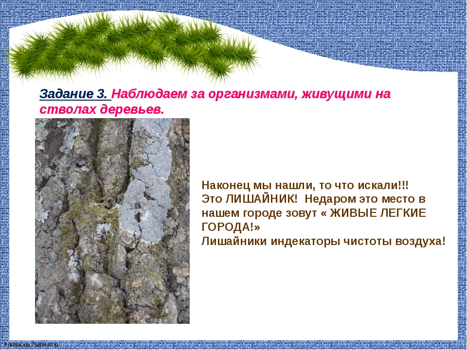 Задание 3. Наблюдаем за организмами, живущими на стволах деревьев. Наконец мы...