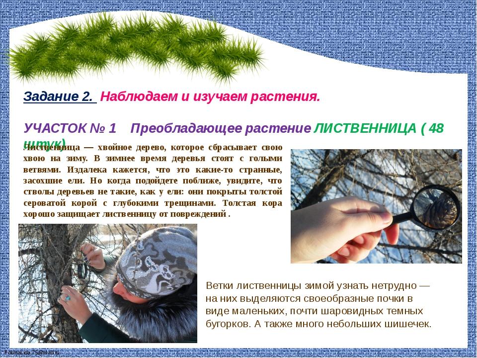 Задание 2. Наблюдаем и изучаем растения. УЧАСТОК № 1 Преобладающее растение...