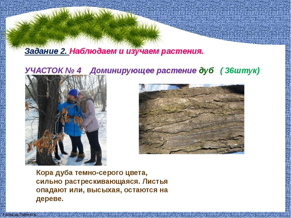 Задание 2. Наблюдаем и изучаем растения. УЧАСТОК № 4 Доминирующее растение ду...