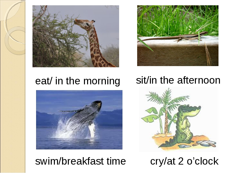 eat/ in the morning sit/in the afternoon swim/breakfast time cry/at 2 o'clock