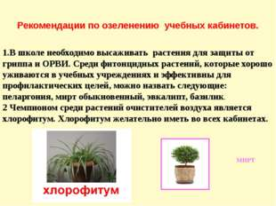 Рекомендации по озеленению учебных кабинетов. 1.В школе необходимо высаживать