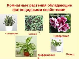 Комнатные растения обладающие фитонцидными свойствами. Сансевиерия Бегонии Пе