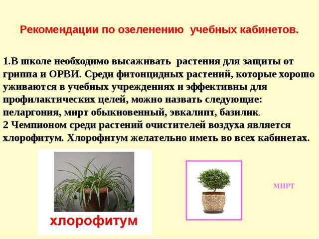 Рекомендации по озеленению учебных кабинетов. 1.В школе необходимо высаживать...