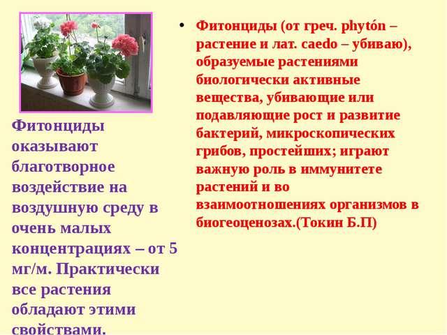 Фитонциды (от греч. phytón – растение и лат. caedo – убиваю), образуемые рас...