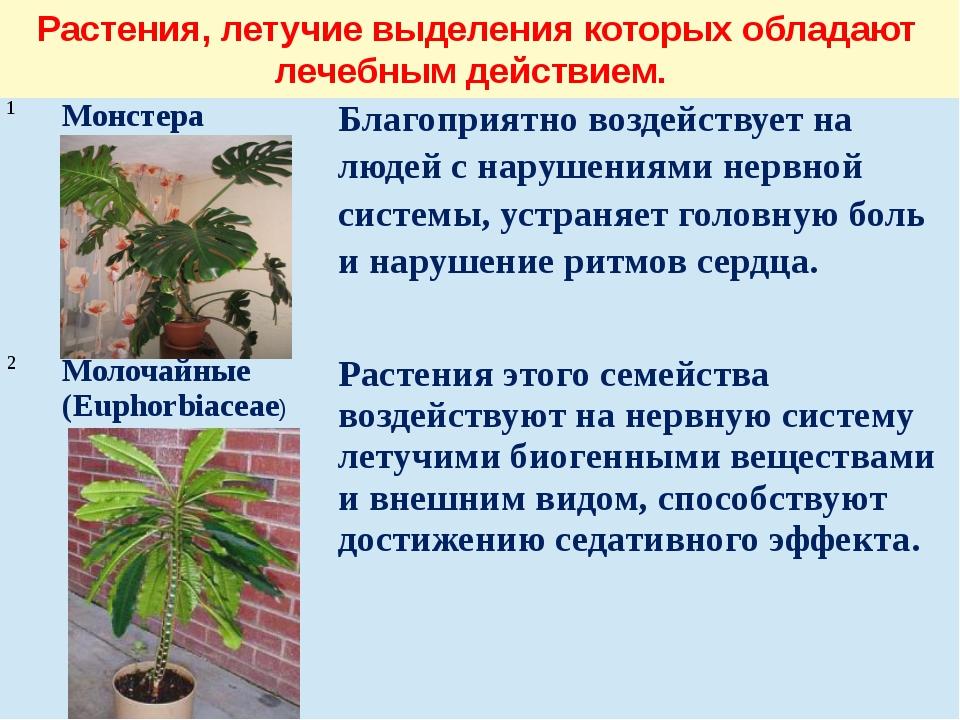 Растения, летучие выделения которых обладают лечебным действием. 1 Монстера Б...