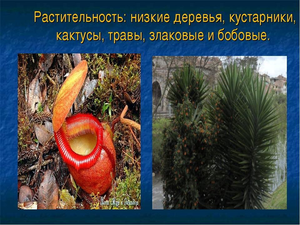Растительность: низкие деревья, кустарники, кактусы, травы, злаковые и бобовые.