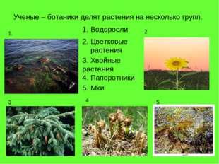 Ученые – ботаники делят растения на несколько групп. Водоросли 1. 2 3 4 5 2.