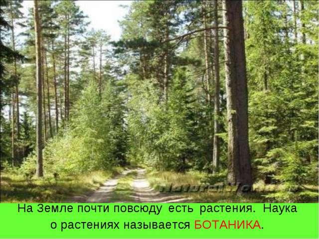 На Земле почти повсюду есть растения. Наука о растениях называется БОТАНИКА.