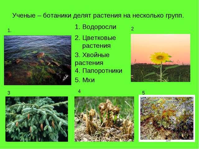 Ученые – ботаники делят растения на несколько групп. Водоросли 1. 2 3 4 5 2....