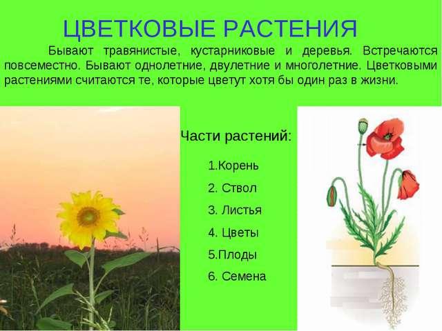 ЦВЕТКОВЫЕ РАСТЕНИЯ Части растений: Бывают травянистые, кустарниковые и дерев...