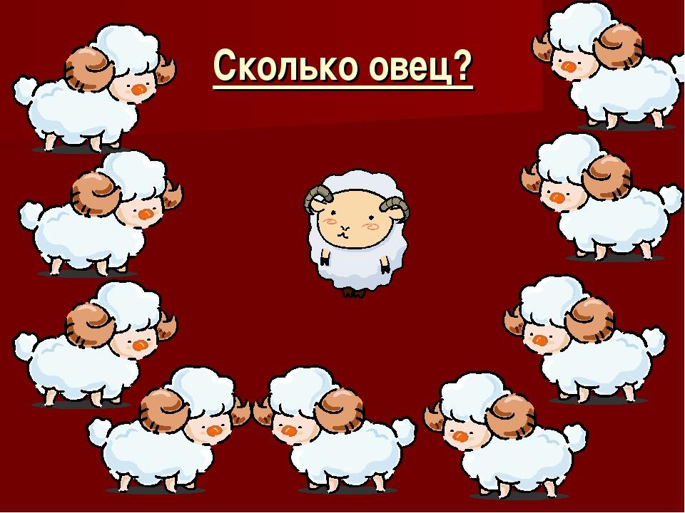 Сколько овец?