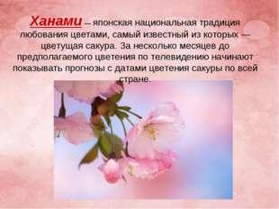 Ханами— японская национальная традиция любования цветами, самый известный из