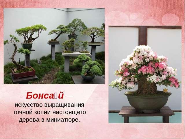 Бонса́й— искусство выращивания точной копии настоящего дерева в миниатюре.