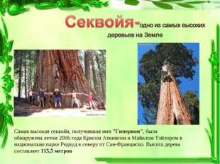 """Самая высокаясеквойя, получившая имя """"Гиперион"""", была обнаружена летом 2006"""