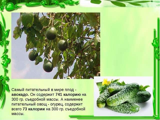 Самый питательный в мире плод - авокадо. Он содержит 741 калорию на 300 гр. с...