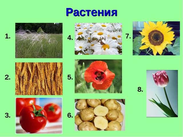 Растения 1. 2. 3. 5. 6. 4. 7. 8.