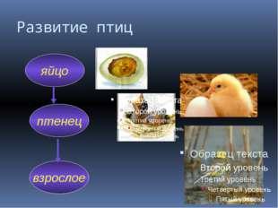 Развитие птиц яйцо птенец взрослое