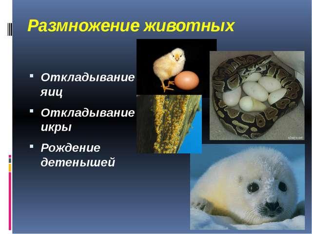 Размножение животных Откладывание яиц Откладывание икры Рождение детенышей