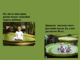 На листе виктории регия может спокойно сидеть ребёнок Диаметр листьев этого р