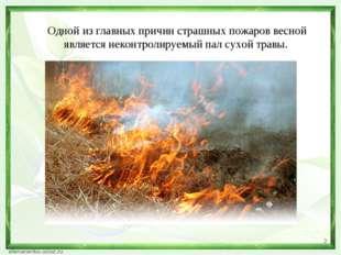 Одной из главных причин страшных пожаров весной является неконтролируемый пал