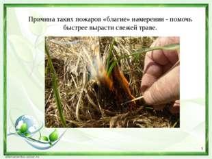 Причина таких пожаров «благие» намерения - помочь быстрее вырасти свежей трав