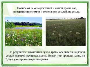 * Погибают семена растений и самой травы над поверхностью земли и семена под